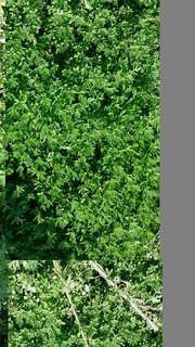 植物アップ.jpg